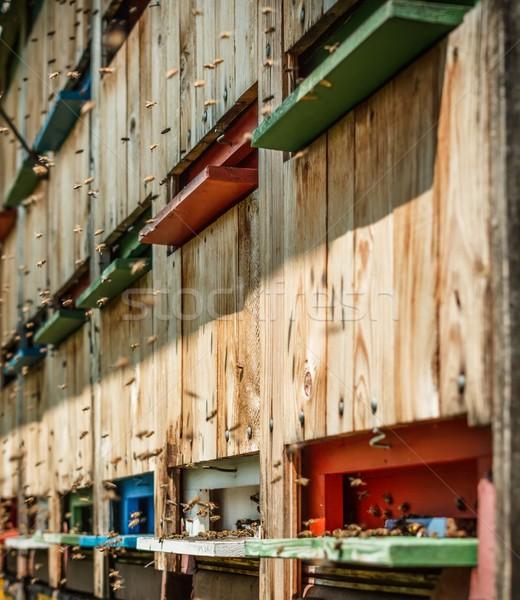 Bal arısı açık atış ev ahşap yaz Stok fotoğraf © grafvision