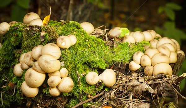 Fungo árvore coberto musgo verde outono Foto stock © grafvision
