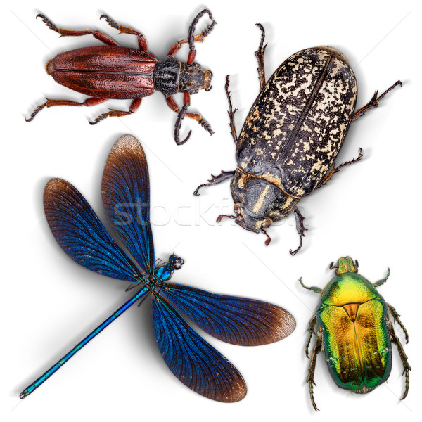 Set of insects Stock photo © grafvision