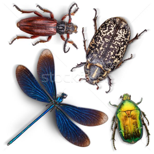 Conjunto insetos branco natureza fundo azul Foto stock © grafvision