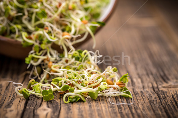 Mix of sprouted seeds Stock photo © grafvision