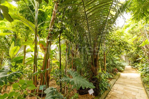 Palmera invernadero hermosa jardín primavera hoja Foto stock © grafvision