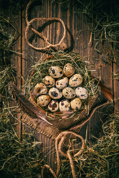 Quail eggs in a hay nest Stock photo © grafvision