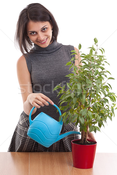 Woman irrigate plants in flowerpots Stock photo © grafvision