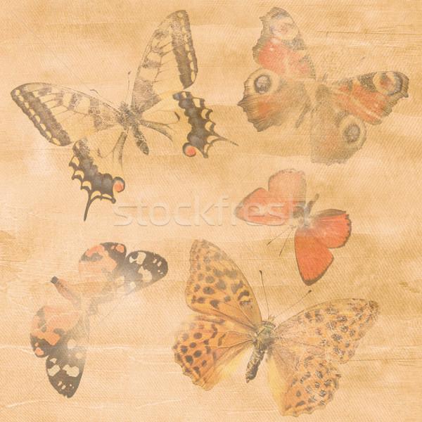 Papierstructuur vlinder communie bloemen blad achtergrond Stockfoto © grafvision