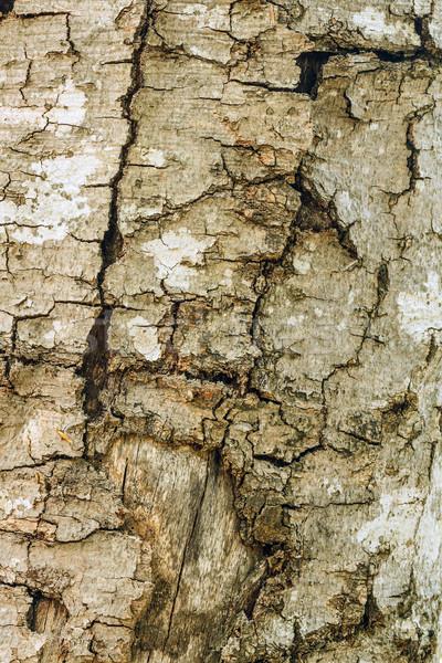 Ugatás fa közelkép mintázott textúra fa Stock fotó © grafvision