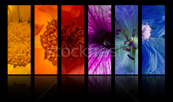 Flowers Stock photo © grafvision