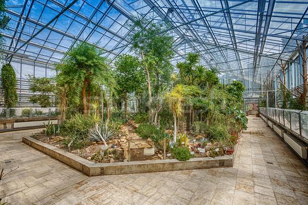 Palm trees Stock photo © grafvision