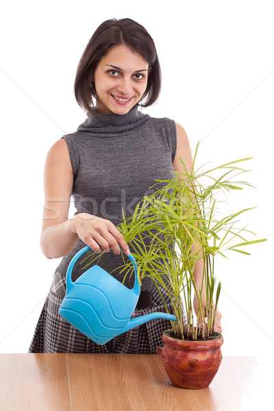 Stock photo: Woman watering plant