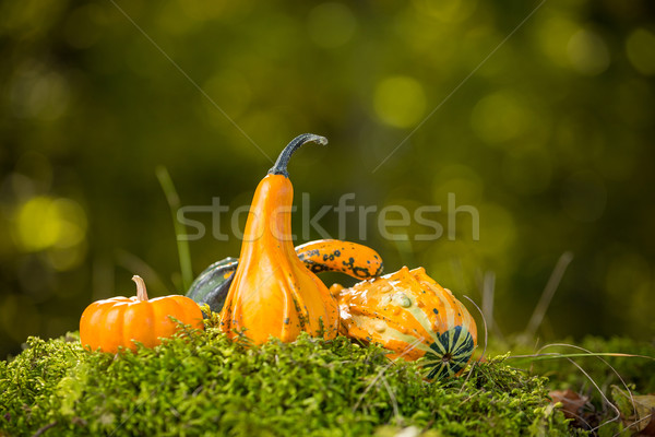 Autumn decor Stock photo © grafvision