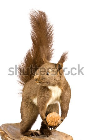 chipmunk Stock photo © grafvision