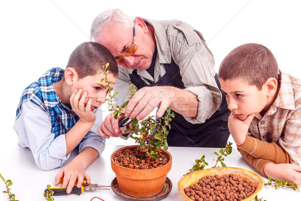 Сток-фото: старший · человека · внучата · глядя · бонсай · дерево
