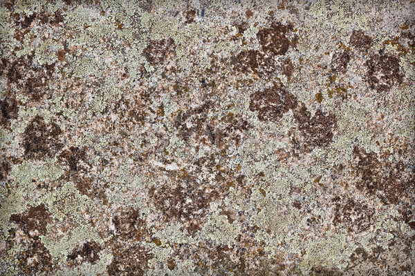 Aged wall texture Stock photo © grafvision