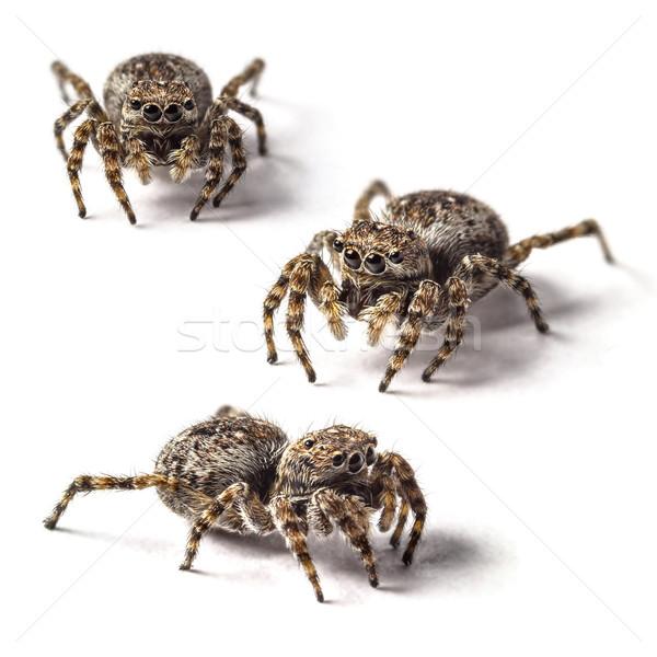 прыжки Spider небольшой белый глазах фон Сток-фото © grafvision