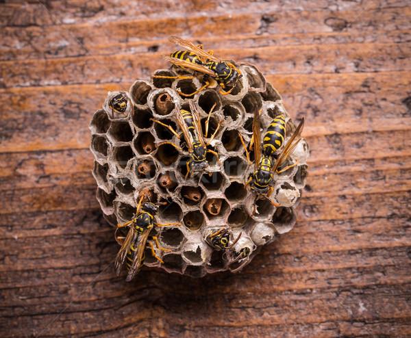 Kamm rustikal Holzbrett arbeiten fliegen Tier Stock foto © grafvision