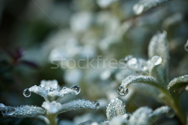 Fresh plant Stock photo © grafvision