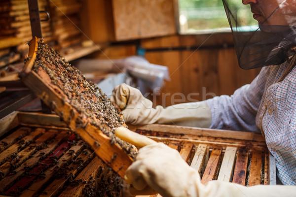 Foto stock: Controlar · quadro · mel · homem · casa · quadro