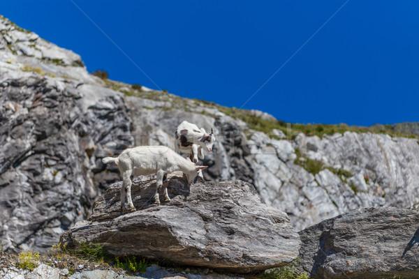 Munte capră doua tineri stâncă peisaj Imagine de stoc © grafvision