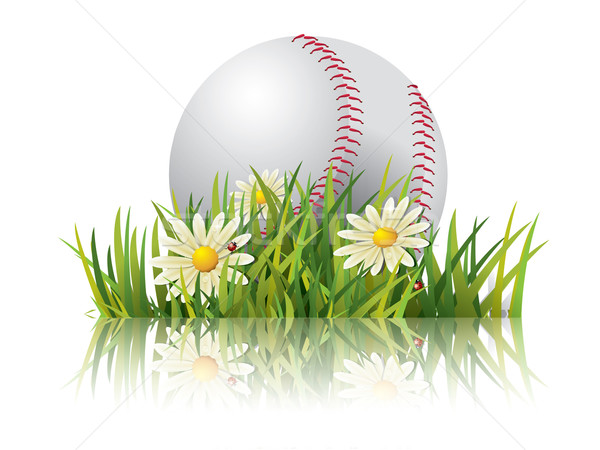 Baseball on grass Stock photo © graphit