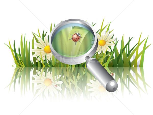 Zöld fű katicabogár égbolt tavasz fű tájkép Stock fotó © graphit