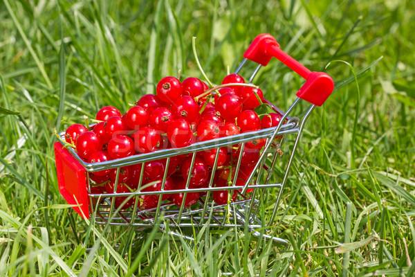 Alışveriş sepeti kırmızı frenk üzümü yeşil ot iş gıda Stok fotoğraf © Grazvydas