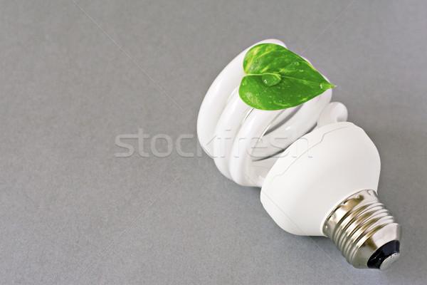 Eco lampadina foglia verde grigio luce foglia Foto d'archivio © Grazvydas