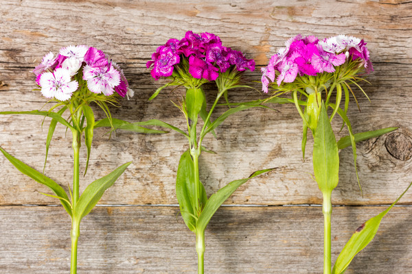 Flores silvestres parede três crescer Foto stock © Grazvydas