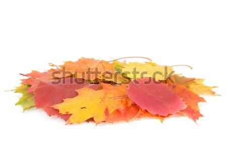 Dry leaves pile  Stock photo © Grazvydas