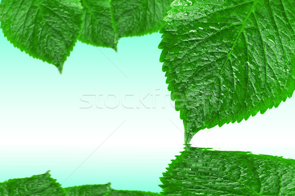 leaves with reflection on the water Stock photo © Grazvydas