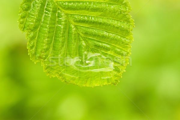 зеленый влажный лист мелкий Focus лес Сток-фото © Grazvydas