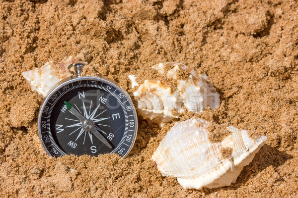 Compass and seashells Stock photo © Grazvydas