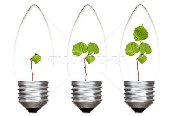 Pflanzen zunehmend innerhalb Glühbirnen grünen isoliert Stock foto © Grazvydas