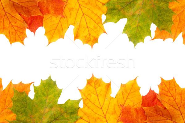 Outono bordo folhas quadro cópia espaço textura Foto stock © Grazvydas