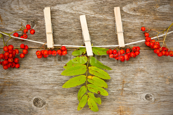 Red rowan  hanging on the clothesline Stock photo © Grazvydas