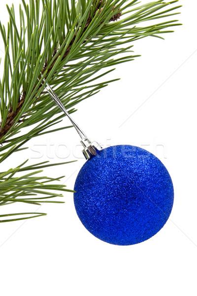 çam şube mavi Noel önemsiz şey beyaz Stok fotoğraf © Grazvydas