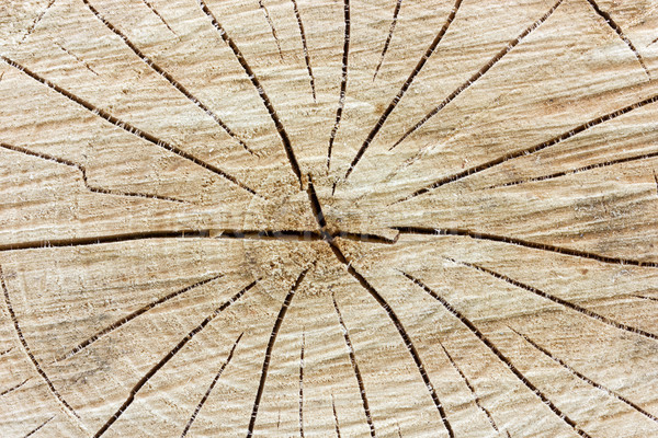 Tree stump background Stock photo © Grazvydas
