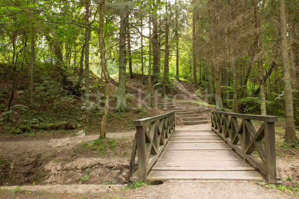 Wooden bridge and stairs in the green forest  Stock photo © Grazvydas