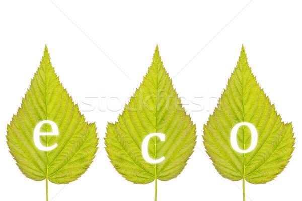 правописание Эко зеленые листья изолированный белый зеленый Сток-фото © Grazvydas