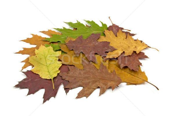dirty fallen leaves Stock photo © Grazvydas