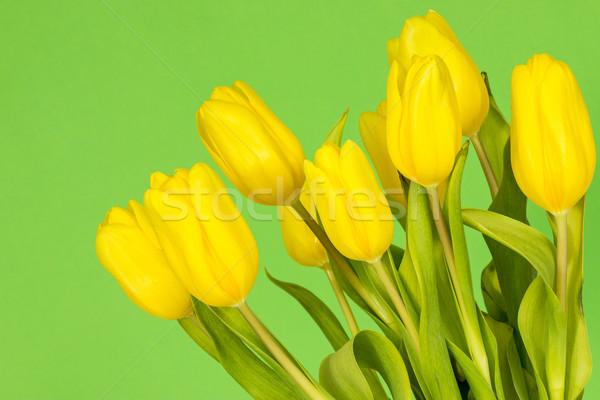 Tulipani verde giallo colore celebrazione Foto d'archivio © Grazvydas