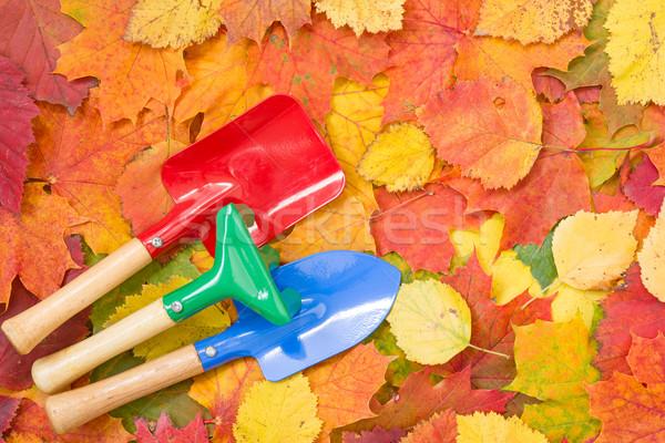 Garden tools and autumn leaves Stock photo © Grazvydas