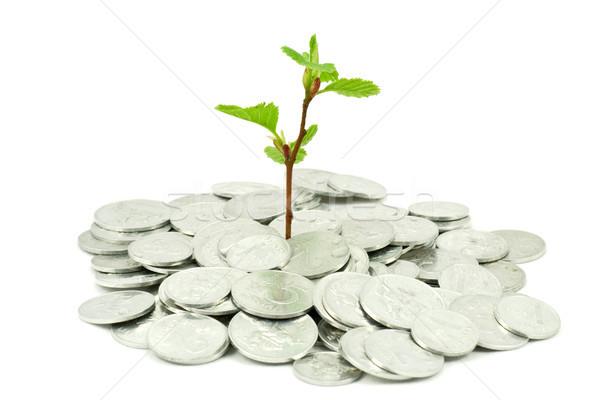 финансовых роста завода монетами белый деньги Сток-фото © Grazvydas