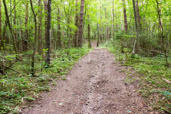 путь лес деревья природы зеленый древесины Сток-фото © Grazvydas