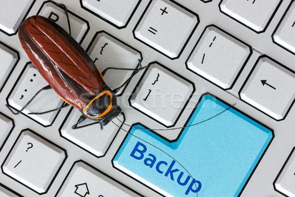 Bug on the computer keybord  Stock photo © Grazvydas