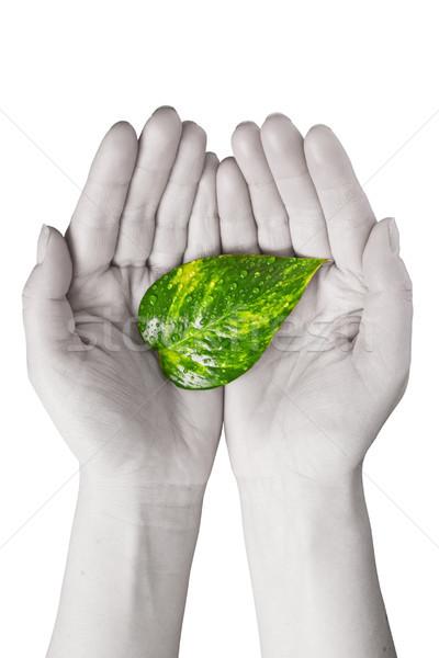 green leaf in human hands Stock photo © Grazvydas