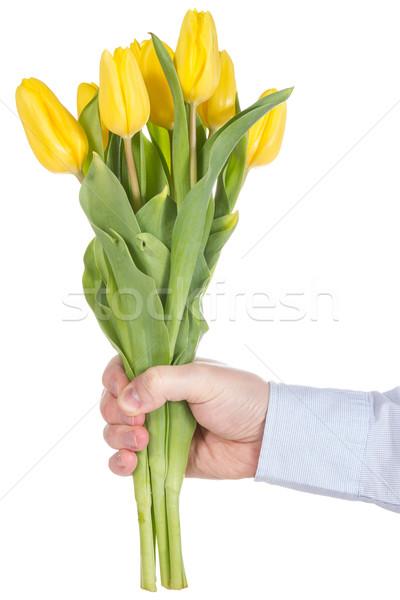 стороны желтый тюльпаны изолированный белый Сток-фото © Grazvydas