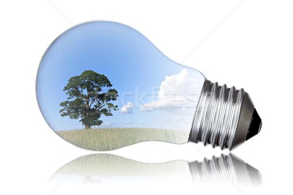 Groene energie zomer landschap boom gloeilamp technologie Stockfoto © Grazvydas
