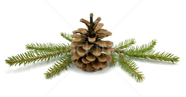 Cone and fir branches Stock photo © Grazvydas