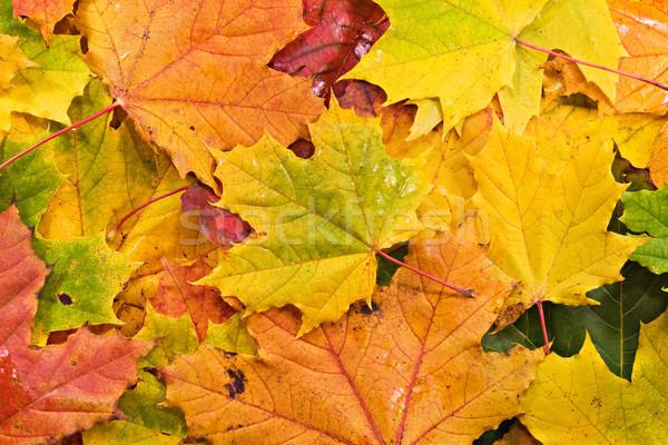 Foto stock: Folhas · árvore · verde · vermelho