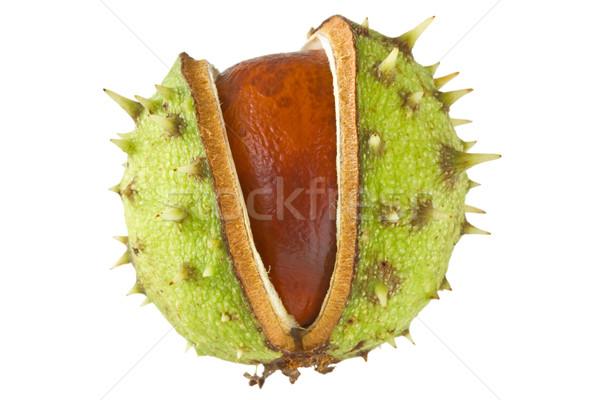 chestnut isolated on white Stock photo © Grazvydas